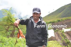 Farm Economic