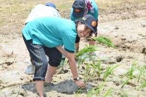 Lena learns about rice cultivation as part of 'Training of Trainer for BRIA Coordinators'.