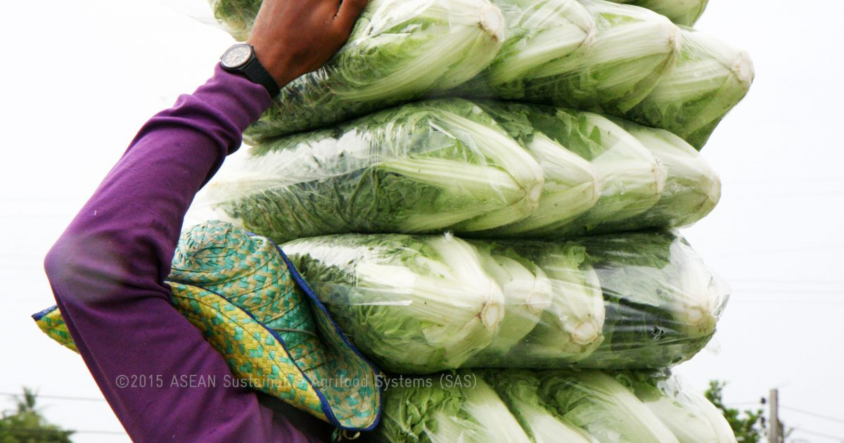 Vegetable growers trapped in the pesticide treadmill
