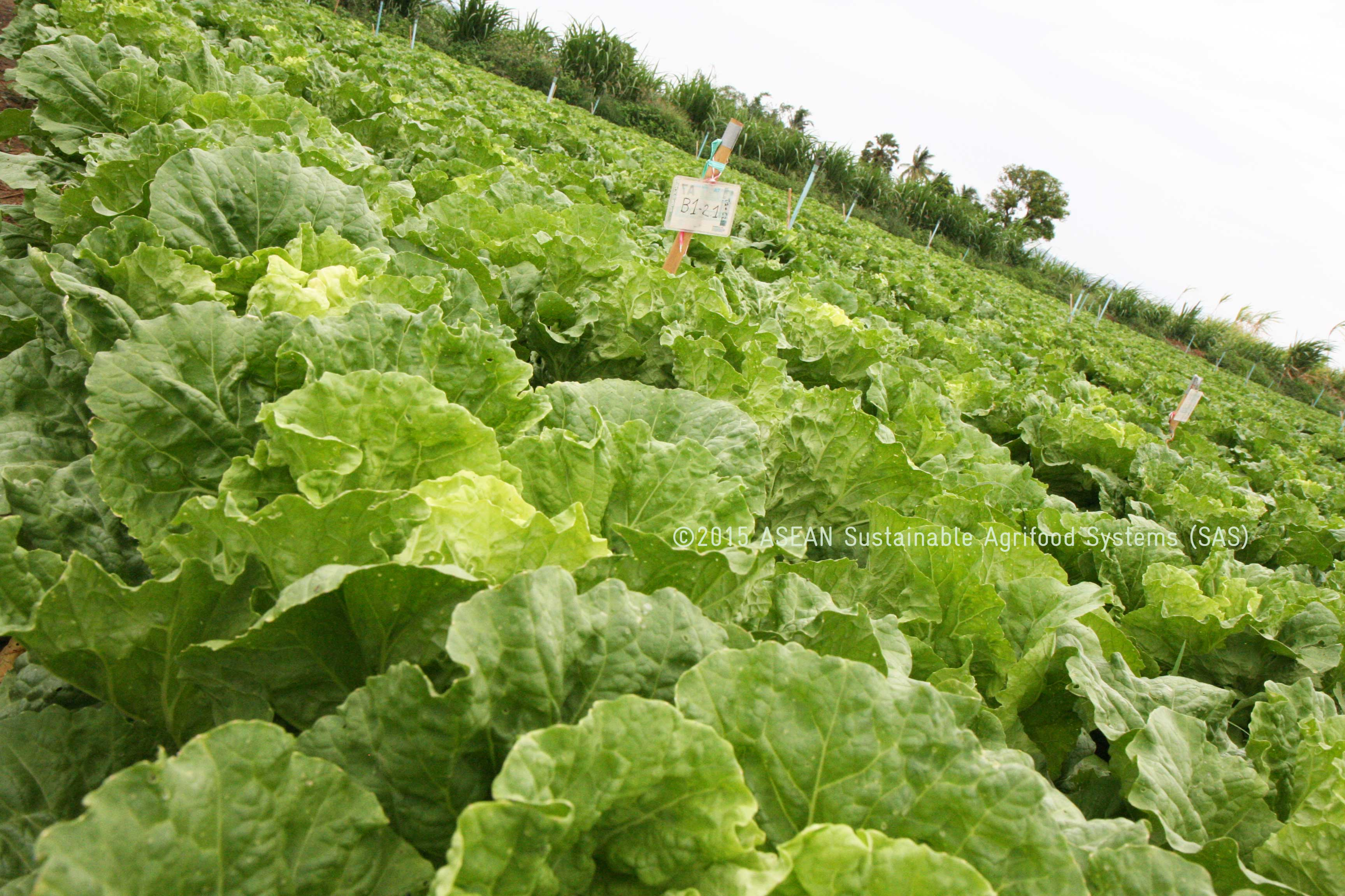 an analysis of the uses of biological pesticides in agriculture One less conventional chemical approach to pest control involves the use of   ipm systems, and sustainable agriculture, can involve use of pesticides, but much   some analyses predict devastation (major crop losses if pesticide use was.
