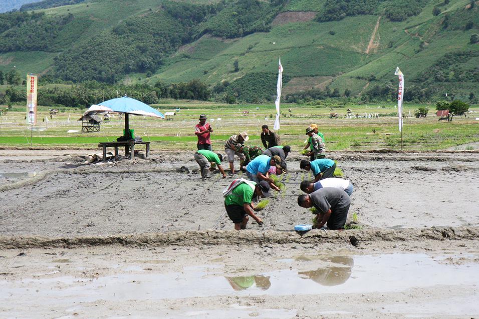 Farmers at Perbulan Village of Kabanjahe District, Indonesia
