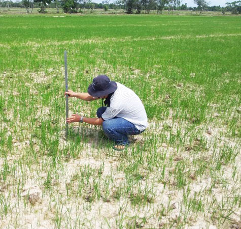 RIICE Cambodia partner CARDI conducting fieldwork in order to validate satellite-derived rice area and rice phenology information with on-the-ground data
