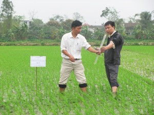 RIICE Vietnam partner IMHEN conducting fieldwork in order to validate satellite-derived yield estimations with on-the-ground data (2)
