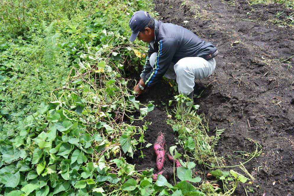 Organic farming in Karo 2