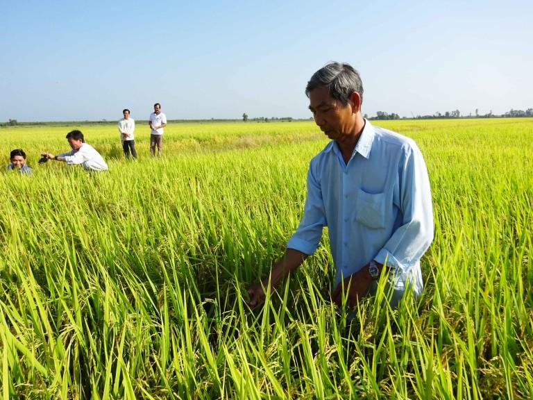 Mr. Nguyen Van Yen, a rice farmer in Vietnam