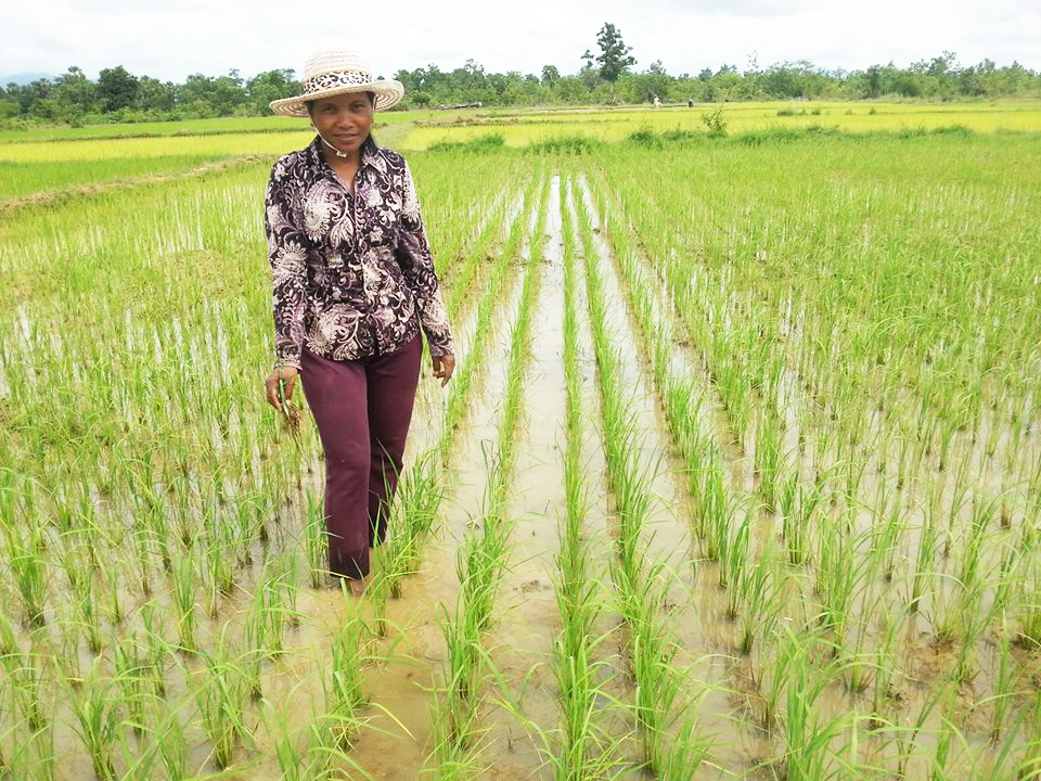 Ms. Him Sothea from Cambodia is an example of the woman who could change her life from nobody to a well-organized organic rice farmer.