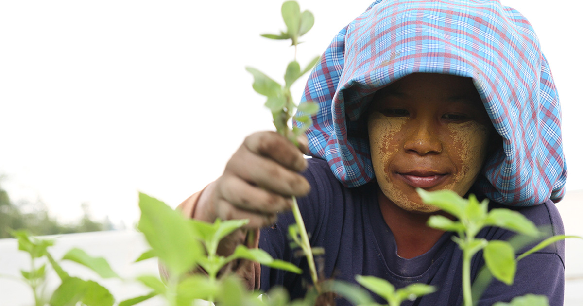 ASEAN cooperation puts biocontrol national legislation on the table while boosting livelihood in the farm
