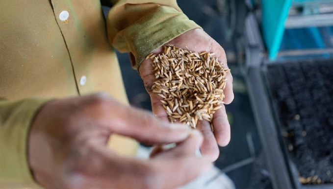 Farmers Love Seed', TV series on seed management airing on Channel 5