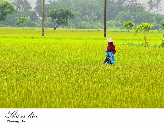 Photo courtesy: RIICE Vietnam