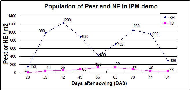 Insect Pest and Natural Enemies' Population in IPM Demo