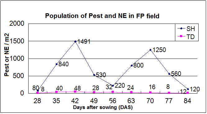 Insect Pest and Natural Enemies' Population in FP