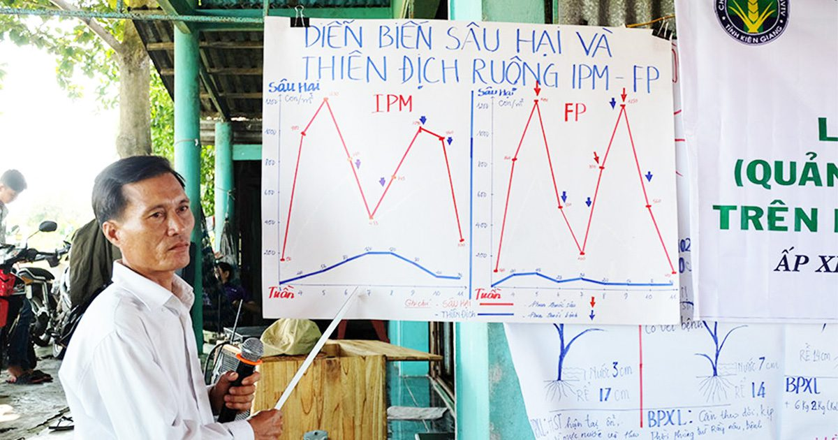 Integrated pest management in rice demonstrates promising results in Vietnam