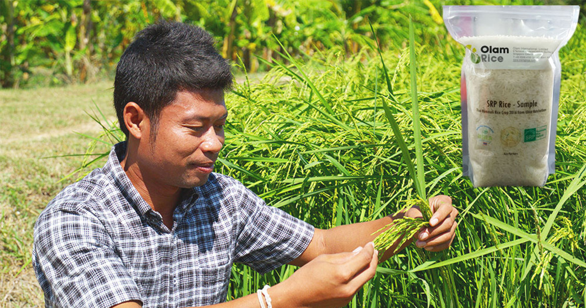 Sustainable Rice Platform Standard: The world's first sustainability standard for rice