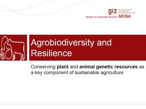 Agrobiodiversity And Ecosystems