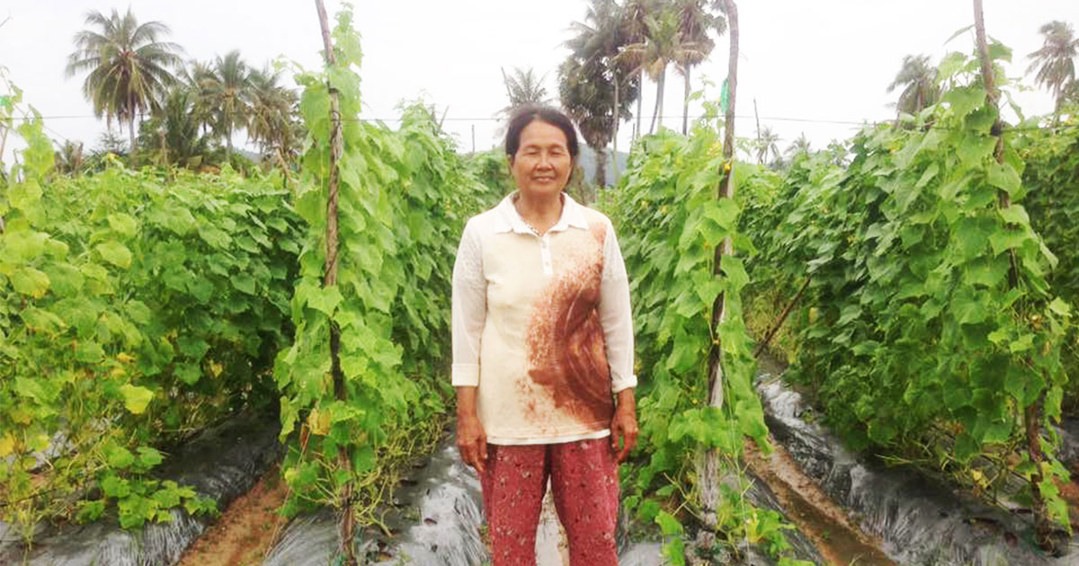 Life of contract farmer in Cambodia: Growing organic, glowing income