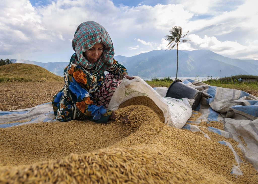Photo courtesy of Hasil Panen, Rice Harvesting Season in Indonesia Photo Contest 2015