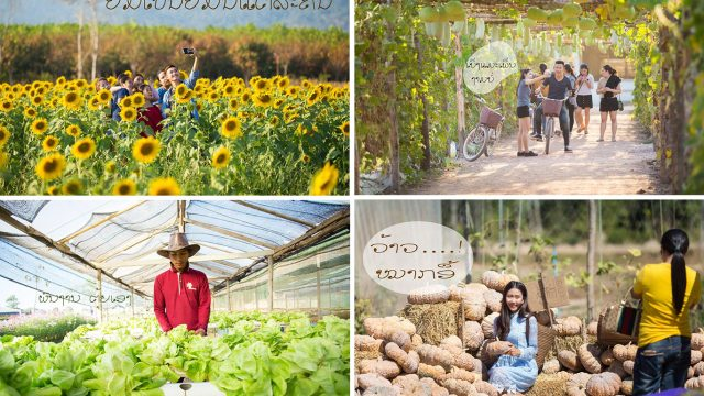 Phutawen Farm: The new hub of sustainable agro-tourism in ...