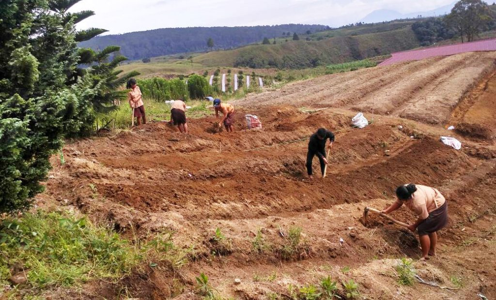 A view of Merek hill as background of working space for students of Agriculture Vocational School during the making of seedbeds.