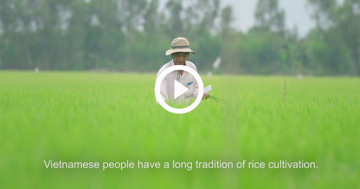 Having lunch in Vietnamese means eating rice: A VDO tells how partnership promotes sustainable rice cultivation in Vietnam