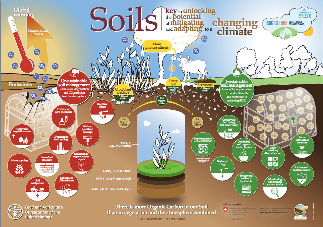 Bad soils vs good soils future is yours asean for Soil as a system