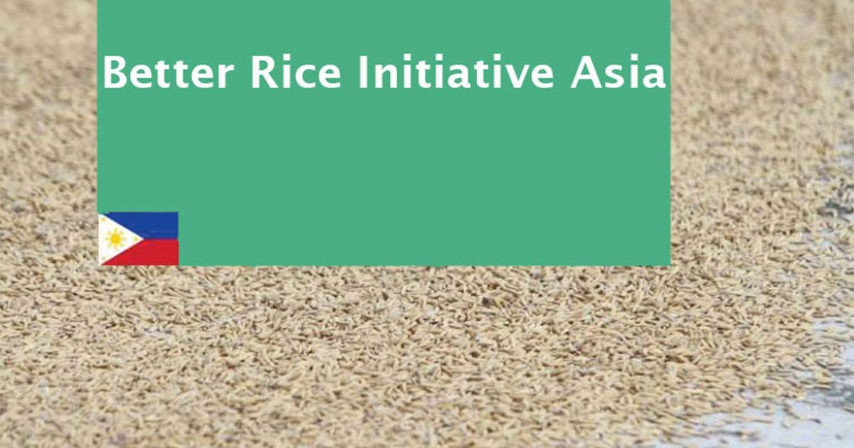 Demo plots in the Philippines prove rice-based technologies raise yields and income