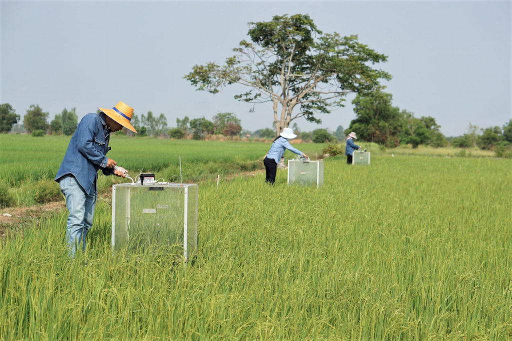 The local researchers collect greenhouse gas fluxes, primarily methane (CH4) and nitrous oxide (N2O) in a paddy field by using a Manually-Operated Closed Chamber in the field in Prachin Buri province, Thailand. (Photo credit: Prachin Buri Rice Research Center)