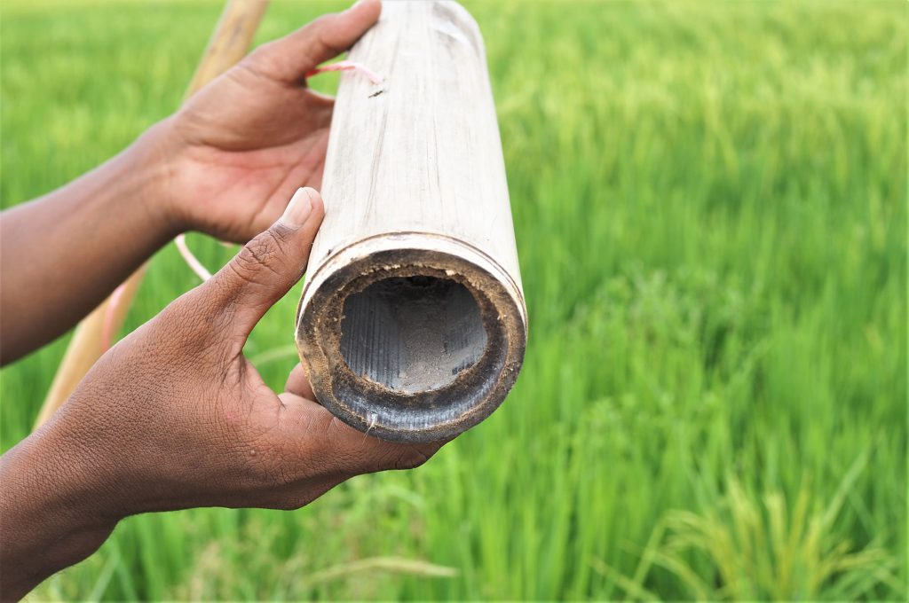 The white powdery substance filled inside the long bamboo tube is used to kill the pest in the rice filed. (Photo credit: Prangthong Jitcharoenkul)