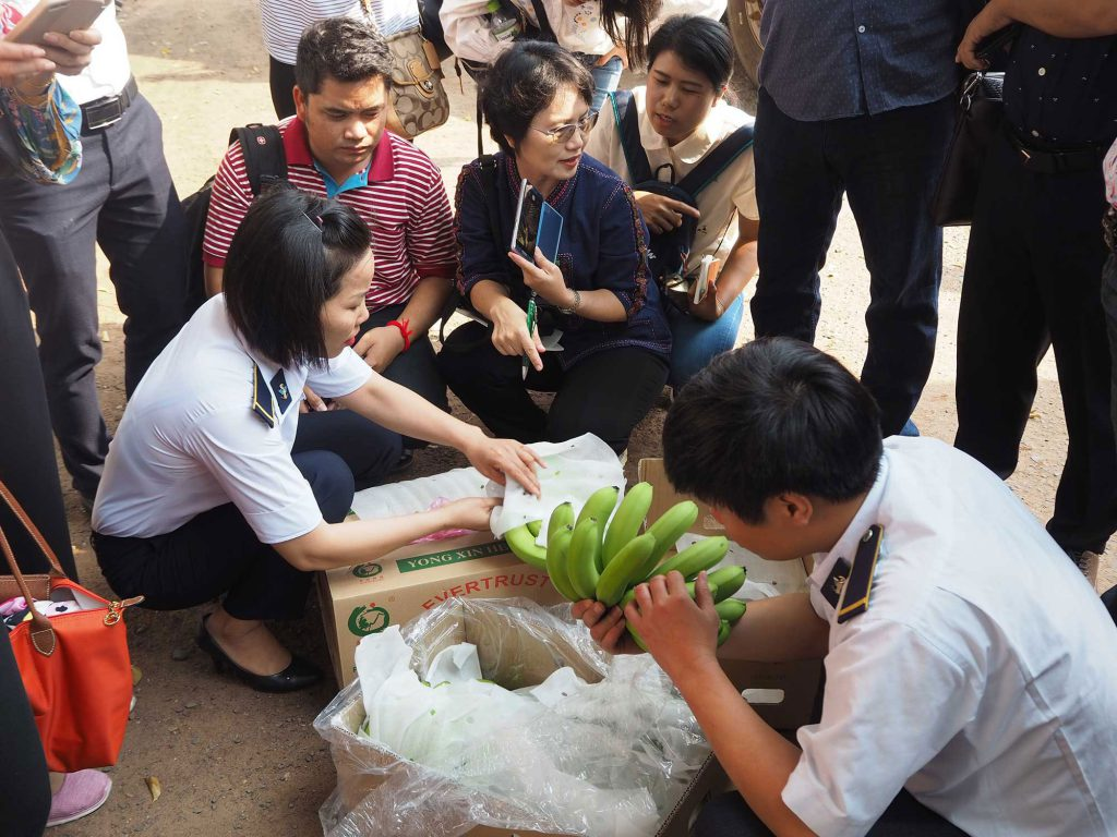 Bananas imported from Cambodia are inspected at the quarantine checkpoint in Binh Phuoc province, Vietnam. (Photo credit: GIZ Vietnam)