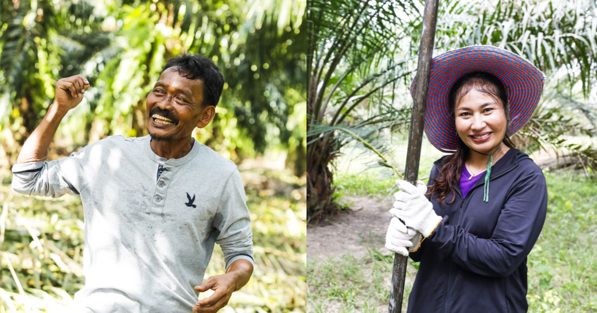 palm oil plantations sustainable