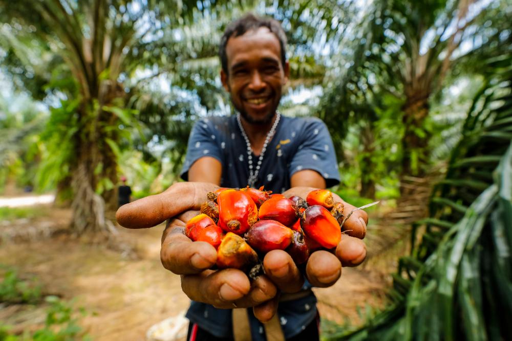 เกษตรกรรายย่อยกับเมล็ดปาล์มน้ำมันที่เขาปลูกด้วยความภาคภูมิใจ (เครดิตรูปภาพ: GIZ Thailand)