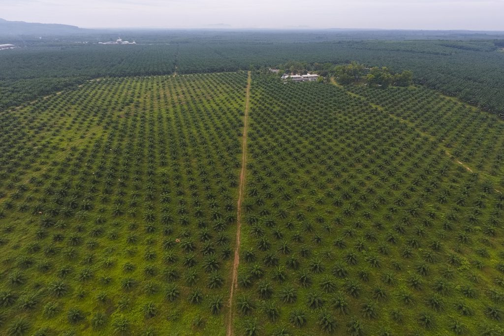 สวนปาล์มในจังหวัดกระบี่ ประเทศไทย (เครดิตรูปภาพ: GIZ Thailand)