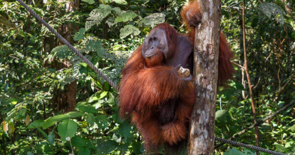 รายงานบัญชีแดงขององค์กรระหว่างประเทศเพื่อการอนุรักษ์ธรรมชาติ (IUCN)