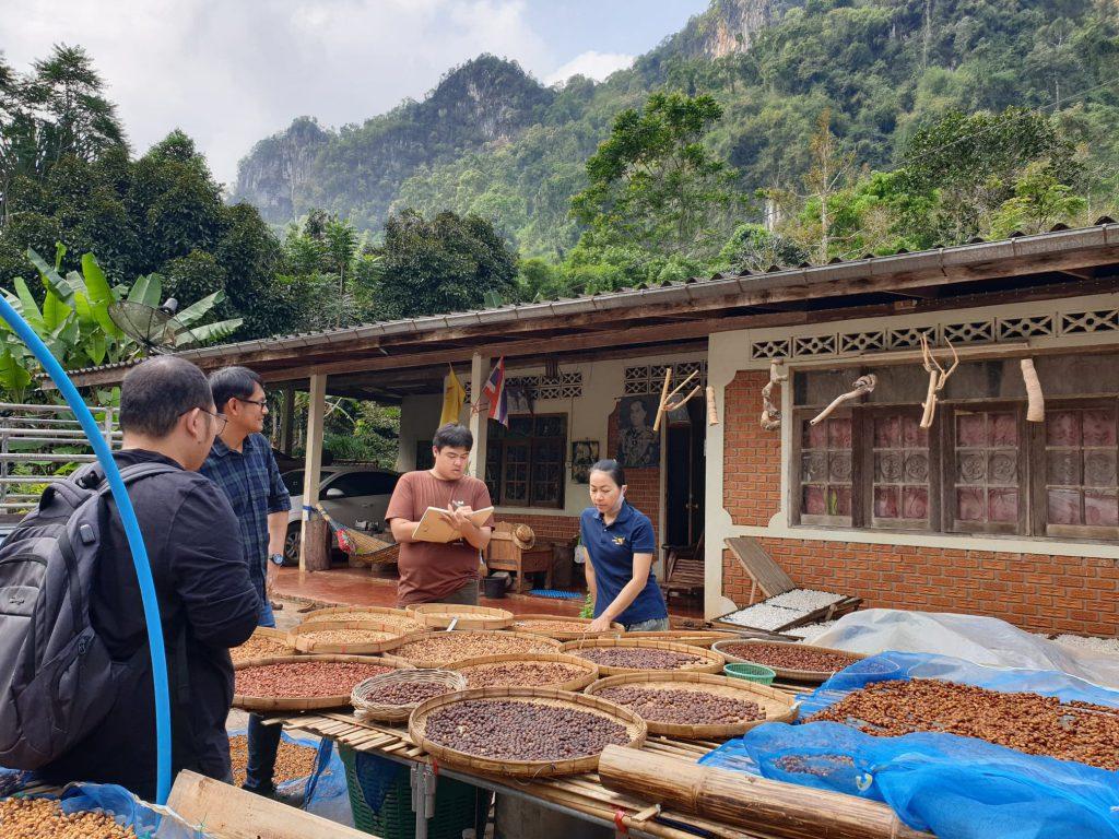 Profressors from Rajamangala University of Technology Isan visits organic Robusta coffee plantation in Chumphon province, Thailand (Photo credit: Dr. Jongkol Janruang)