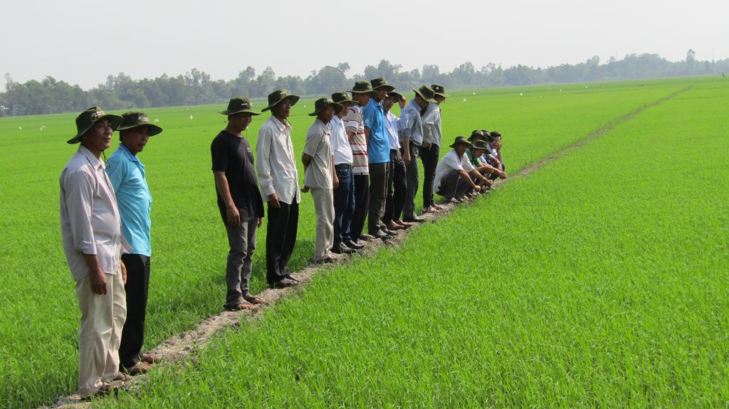 Local farmers take five days to complete the training on SRP & maximum residue levels (MRL). The training was held in An Giang Province on 11 January 2020. (Photo credit: GIZ Vietnam)