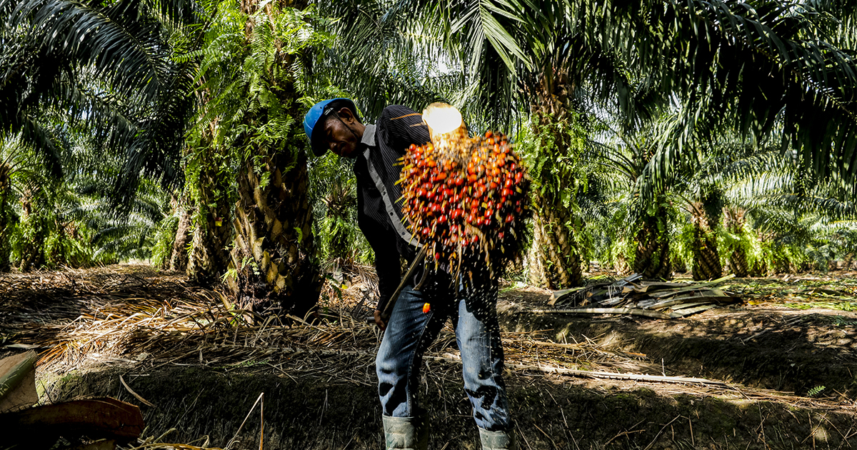 MoU signed to promote the sustainable practices among palm oil producers in Krabi